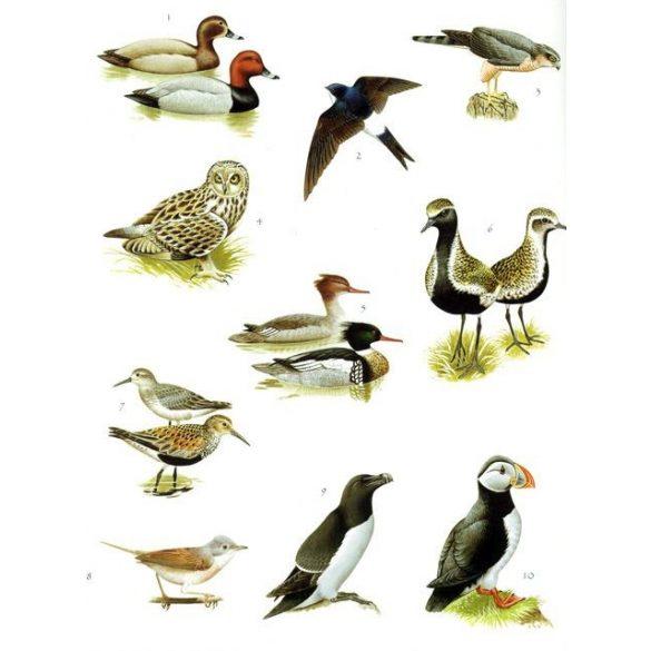 A természet matricáskönyve - Fák, madarak, virágok