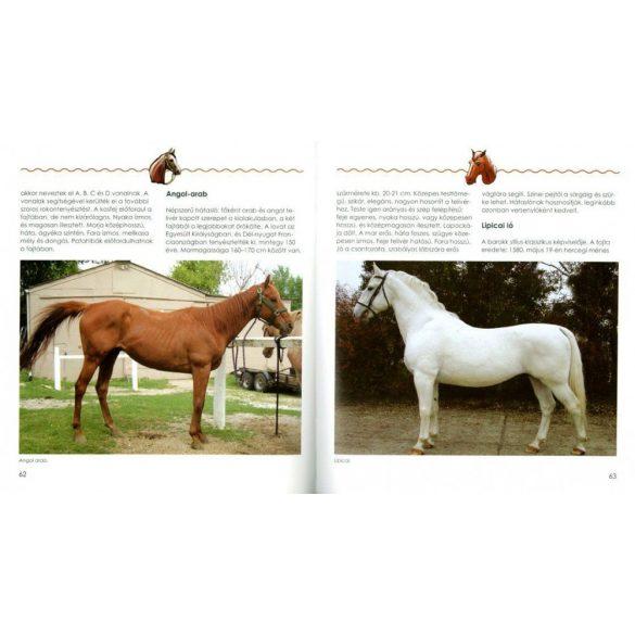Fiatal lovasok kézikönyve