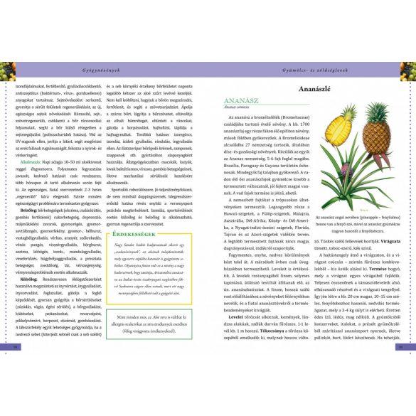 Gyógynövények - a természet kincseskamrája