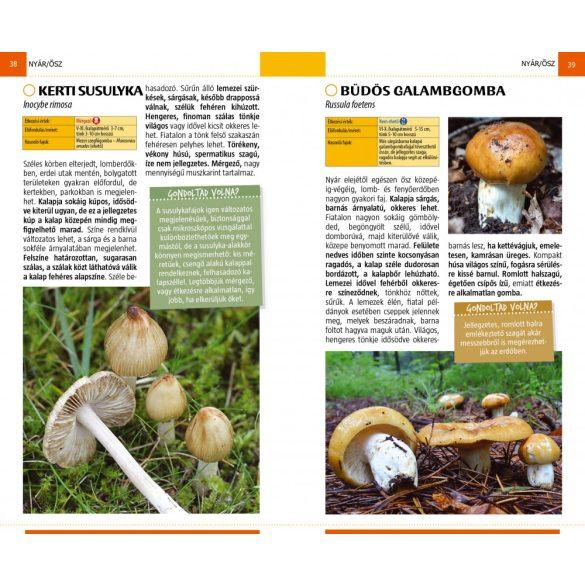 Gombák - Természetbarátok zsebkönyve