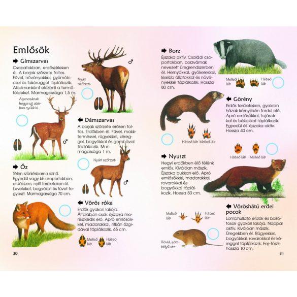 Erdei élővilág - Természetbarátok zsebkönyve
