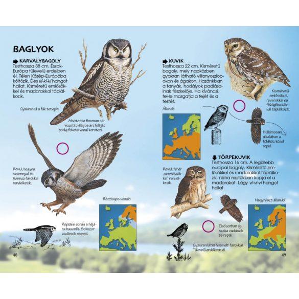 Ragadozó madarak - Természetbarátok zsebkönyve