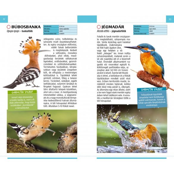 Madarak - Természetbarát zsebkönyv