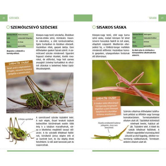 Lepkék, bogarak és más ízeltlábúak - Természetbarátok zsebkönyve